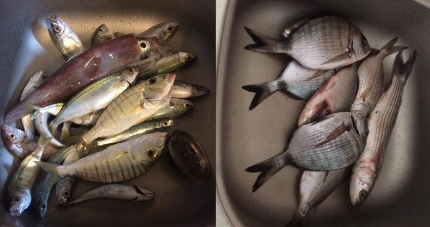 Ловля средней рыбы в Кушадасах. Фото