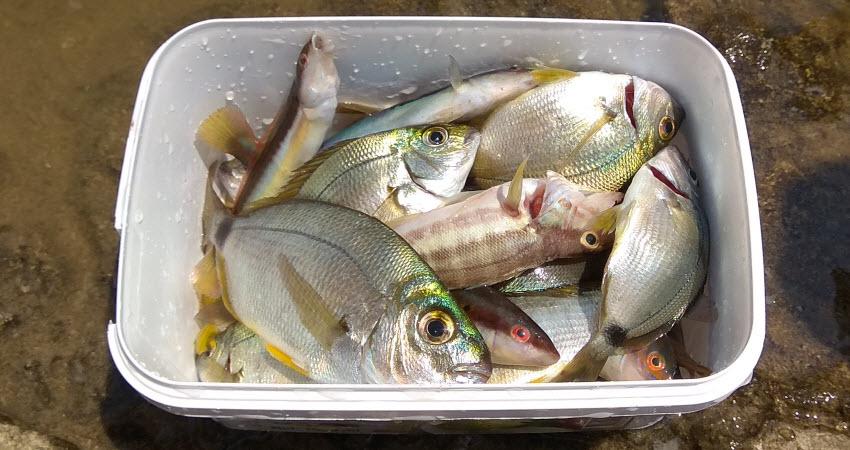 Рыбалка в Кушадасах. Фото